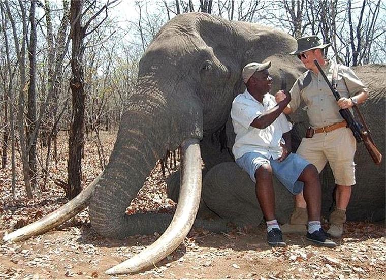 A halott elefánt mellett fog kezet a feltehetően német vadász és kísérője