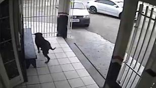 Ez itt a világ egyik legszerencsésebb kutyája