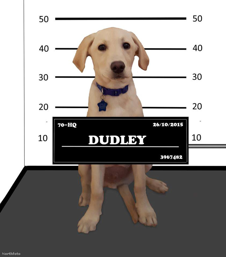 tk3s swns dudley wanted dog 01