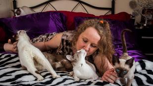 Válóok: a 35 macskára évi 6,5 millió megy el