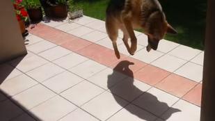 Nézzen saját árnyékukkal hadakozó kutyákat!