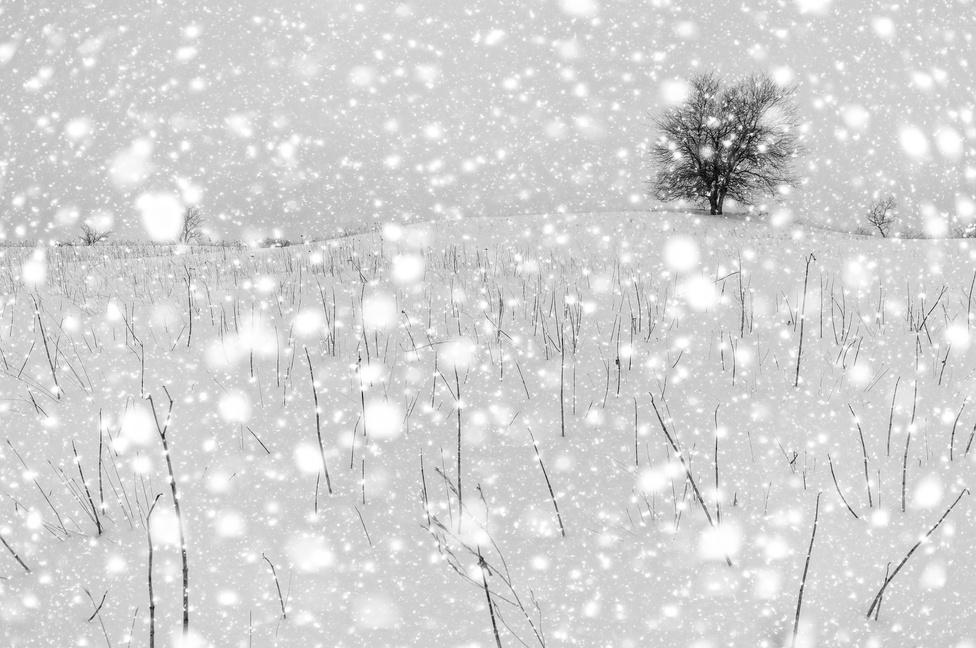 Hózápor (Fekete-fehér természetfotók 2. díj)Régóta foglalkoztat ez a téma: vakuval túlexponált hóesést fotózni. Ha alkalmam van rá, szeretek ezzel kísérletezni.