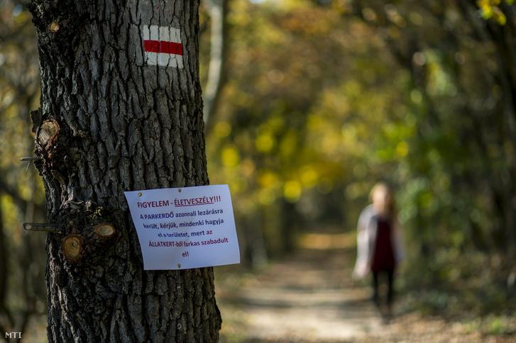 Életveszélyre figyelmeztető felirat a pécsi parkerdőben, november 1-jén