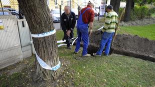 Emberi csontokat találtak a budapesti Hunyadi téren