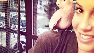 Vajnáné kakaduja rohadtul nem akar bemutatkozni