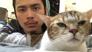 Drake ezzel a macskával ért a csúcsra