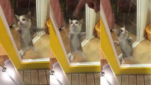 Tegyen le mindent, ilyen tündéri macskát még nem látott!