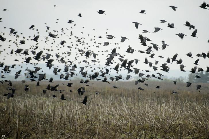 Árverezésre bocsátott termőföld Szécsény határában