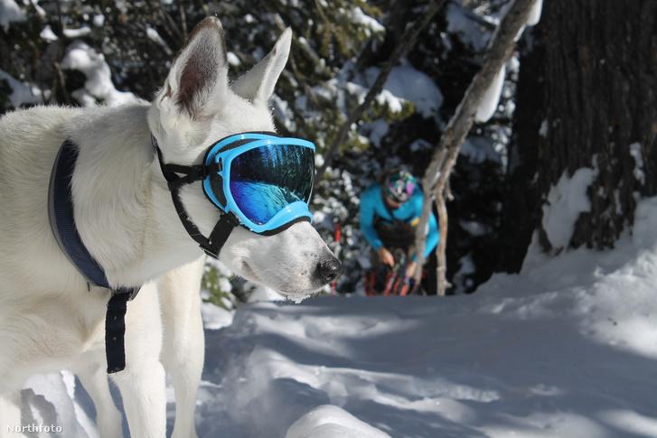 tk3s bm dog goggles 02361115
