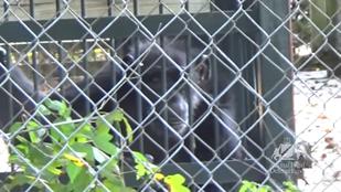 Egy szomorú, cigiző állat miatt perelték be a vidámparkot
