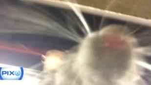 Patkányszelfivel lett gazdagabb a metróban szundikáló férfi
