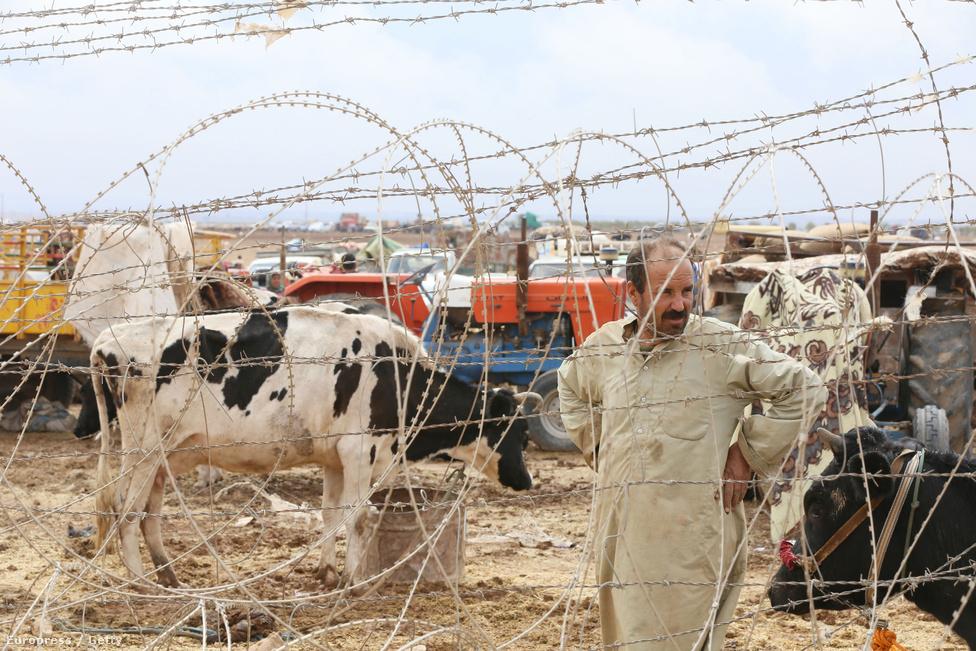 Az Iszlám Állam terrorja ellen menekülő kurdok sokszor a mindenüket elhagyva indultak útnak, ám akadtak köztük olyanok is, akik megpróbálták állataikat, betevőjüket magukkal vinni a hosszú útra.