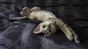 1700 kilométert utazott Csillám, a svéd macska