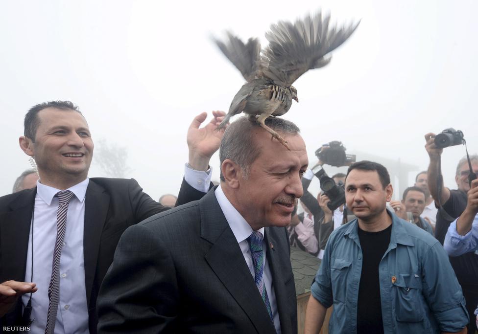 Recep Tayyip Erdogannakmeggyűlt a baja egy mecset avatóünnepségén egy szabadon engedett fajddal. Erdogan államfői székre cserélte miniszterelnöki posztját, de anyár eleji parlamenti választásokkal szertefoszlani látszottak az erős elnöki rendszer kiépítésére irányuló tervei. A kormányzó Igazság és Fejlődés Pártja (AKP) 2002 óta először még abszolút többségét is elbukta. Végül az előrehozott választásokon már sikerült többséget szerezniük. Erdogan a választások miatt is aktivizálta magát, és bombázásba kezdett elvileg az Iszlám Állam, a gyakorlatban sokkal inkább a kurdok ellen. Állítólag maga Erdogan döntötte el még októberben, hogy ki fognak lőni egy orosz katonai gépet, hogy így erősítse meg belföldi pozícióit a pártja által nehezen megnyert választások árnyékában. A november végén lelőtt repülő miatt felbőszült Moszkva leépítette a kapcsolatait a korábban még stratégiai partnernek tekintett Törökországgal.Erdogannal a még mindig közel kétmillió szíriai menekültnek helyet adó Törökország egyértelműen az egyik kulcsszereplővé nőtte ki magát a régióban.