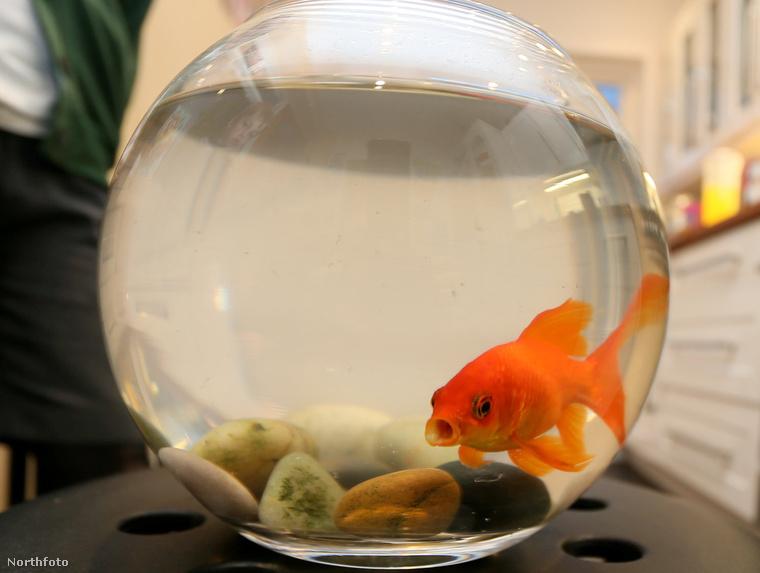 tk3s nti goldfish burglars 01