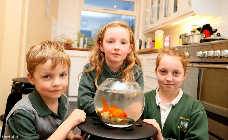 Örülnek a gyerekek a hal egészségi állapotának.
