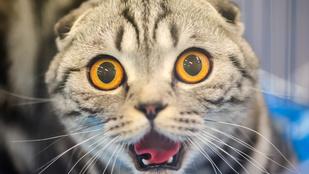Ezt az infót egész hétvégén emésztheti: itt a macskatarkó-szag spray