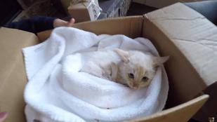 Cukiság: ez a cica bizony visszatért a halálból