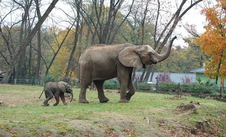Fotó: Nyíregyházi Állatpark