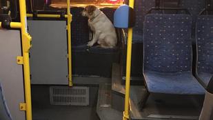 Egy komplett buszt sajátított ki egy kutya Budapesten