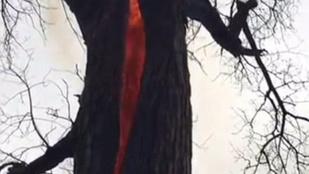 Belülről lángolt az ohiói ördögi fa