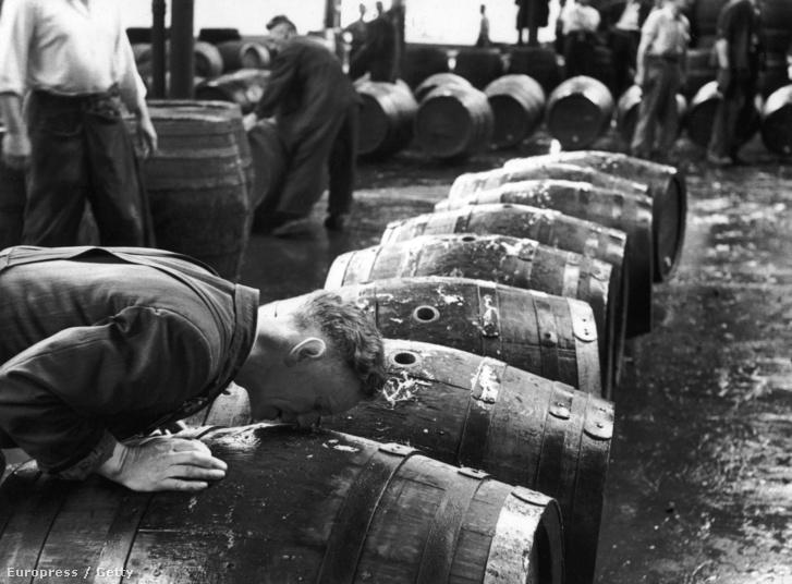 """Hivatásos """"szagoló"""" ellenőrzi a sör tisztaságát a Guinnes dublini gyárában, 1953-ban."""