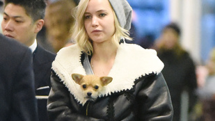 Jennifer Lawrence kutyára cserélte a sminkjét