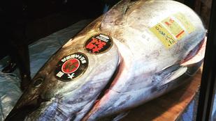 Ön evett már 33 milliós tonhalat?