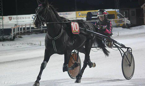 Helena Stahl és az elhunyt és megevett lova.