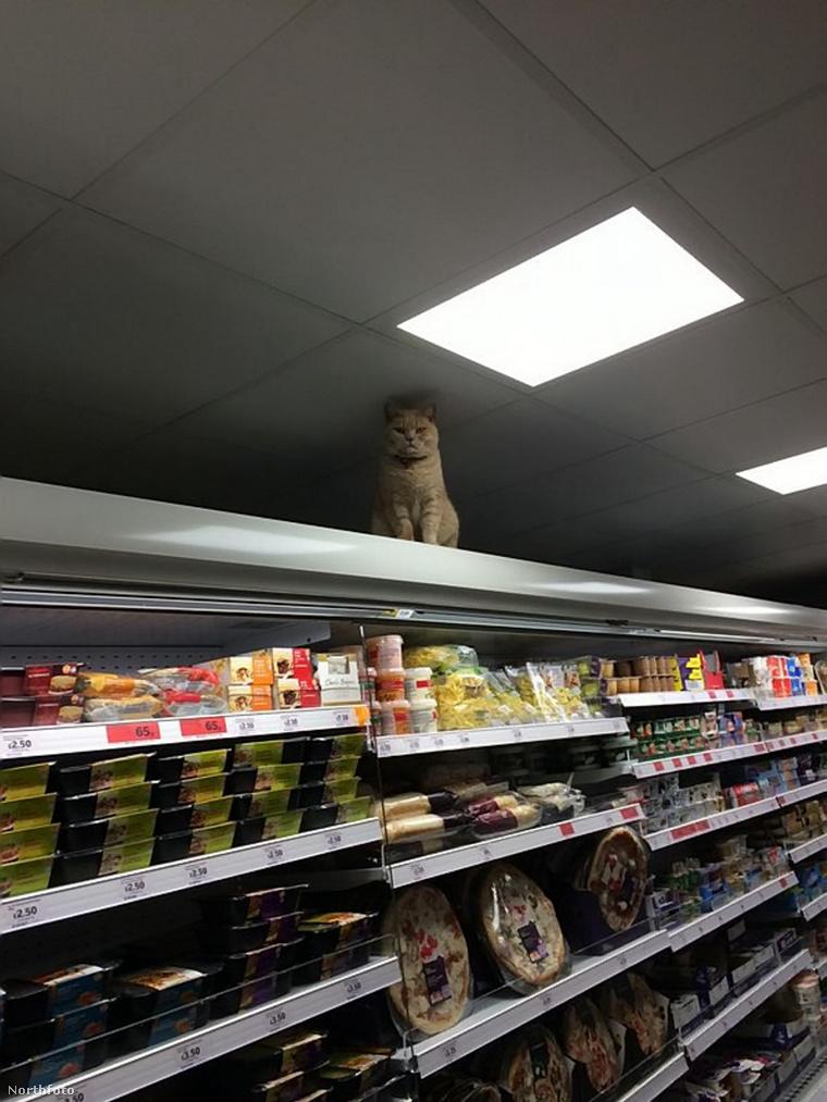 tk3s swns supermarket cat 01