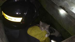 Megmentették a kaposvári tűzoltók a macska egyik életét a kilencből