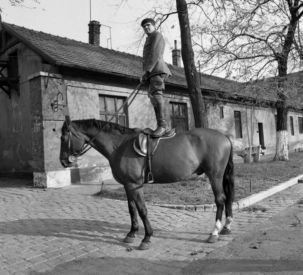 A rendszerváltás után majdnem megsemmisült az összes kép. 1993-ban Urbán Tamás fotós, a Zsaru Magazin száguldó riportere a szerkesztőségbe menet belebotlott hatvanezer fotónegatívba. Ennek köszönhetően a negatívok végül a Magyar Fotográfiai Múzeumba kerültek, ahol a gyűjtemény különálló, fontos részét képezik. Köszönhetően az ilyen fotóknak is, mint ez a lovas.