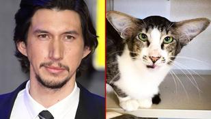 Ikertornyok: A Star Wars főgonosza és egy gazdit kereső macska