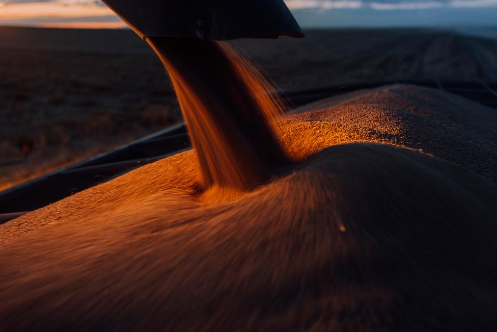 Az aratás utolsó napjain is sikerül telepakolni a teherautókat a takarmánnyal.
