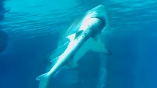 Kannibalizmus és bandaháború a cápák közt a szöuli akváriumban