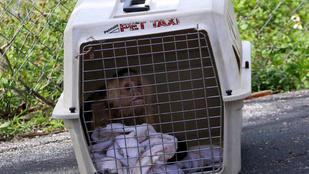 Rejtélyes haláleset: két majom a holttest mellett