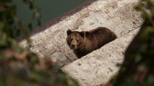 A budapesti medvék megmondták: lesz még tél