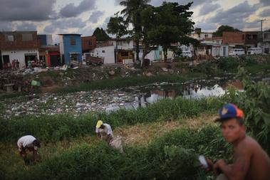 Füvet szednek a helyiek egy Brazil kisvárosban. A településeket körülvevő állóvizekben elszaporodó szúnyogok a felelősek a vírus rohamos terjedéséért.