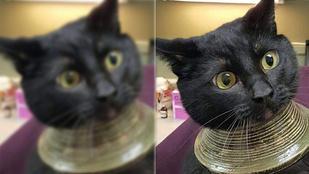 A vázába szorult macska az internet új kedvence
