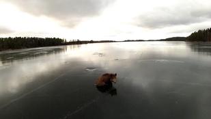 Ennél svédebb ma már nem lesz: malacmentés a jégről
