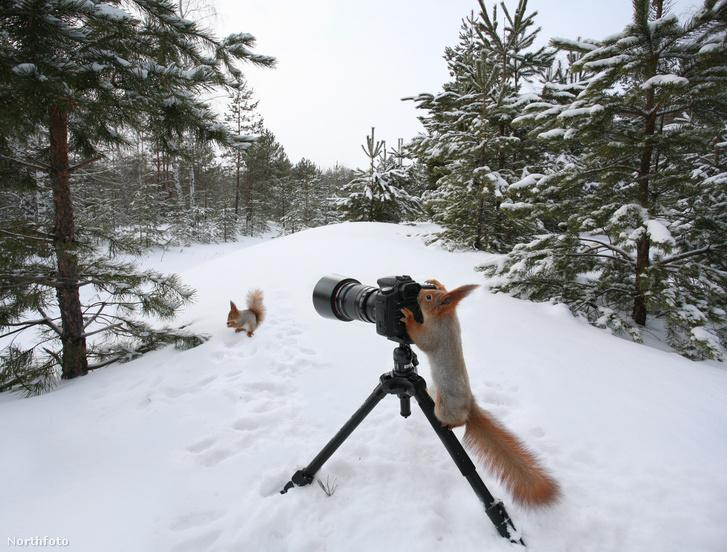 tk3s sn squirrel snap 5