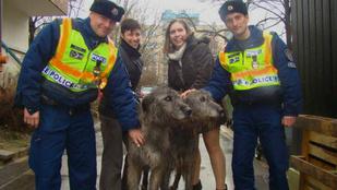 Ezek a jó fej rendőrök két elkóborolt kutyát juttattak haza