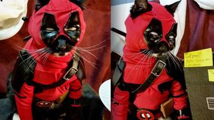 A cosplayező macskánál nincs nagyobb menőség