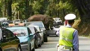 Ezért ne álljon soha egy kikosarazott elefánt útjába