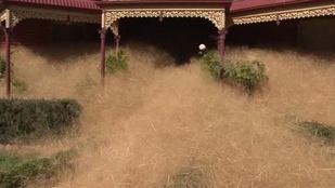 Ördögszekerek tartják rettegésben Ausztrália lakóit