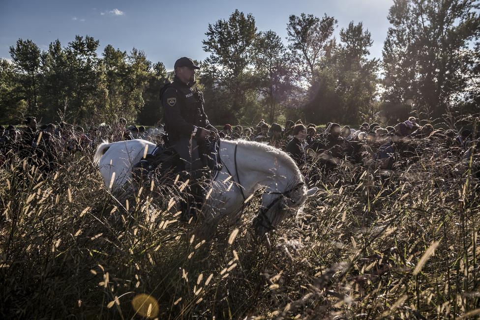Hír kategória 1. hely (sorozat) Szlovén lovasrendőr tereli a menekülteket a horvát határnál.