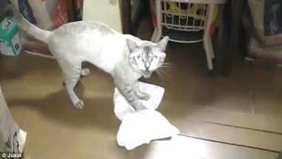 Ha utál takarítani, szerezzen be egy macskát