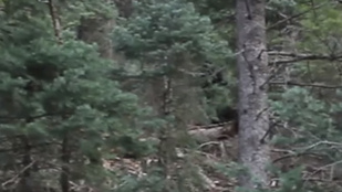 Nagylábúról egy utahi erdőben készülhetett leleplező felvétel