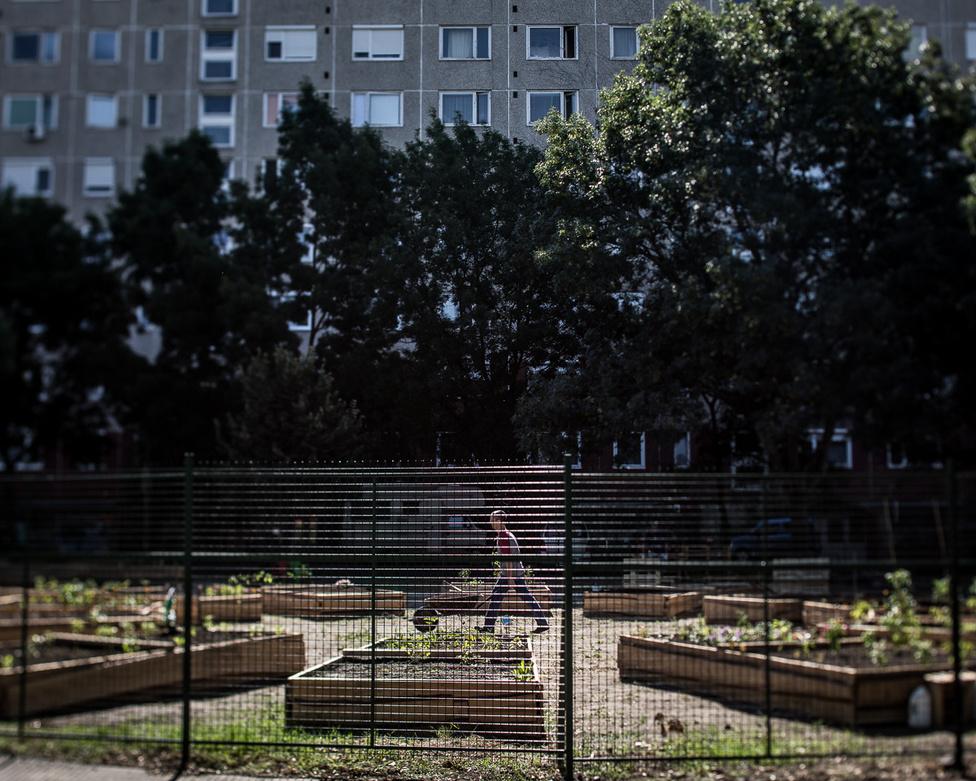 Árnyas kert