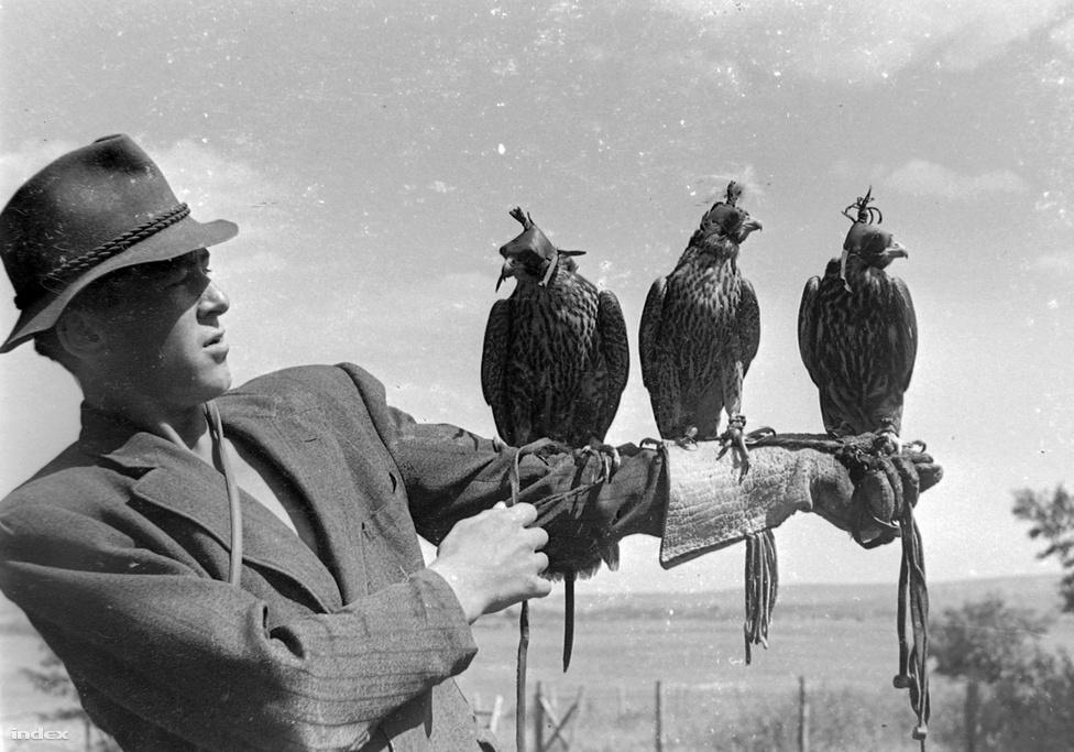 Nem lehet mindenkinek olyan unalmas hobbija, mint a fényképészkedés. Ez a férfi madarakat röptet, rögtön hármat. De legalább fotó van róla.